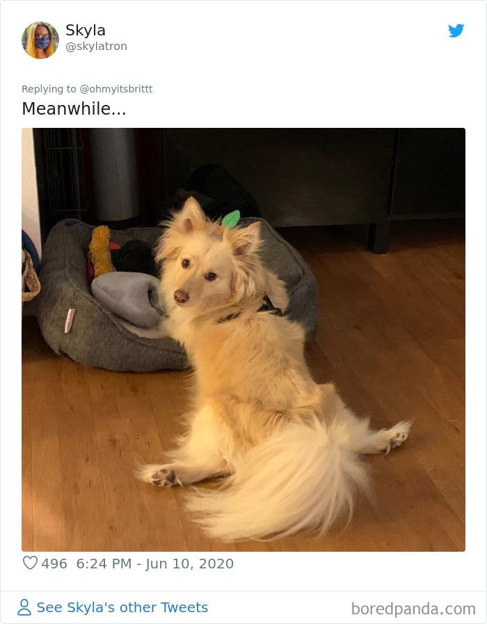 15張狗狗「WTF坐姿」爆笑時刻 牠「把自己當人」還懂翹腳!