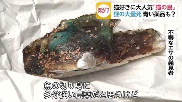 日本「貓之島」70隻貓慘遭毒死!嫌犯辯:我只是在「趕烏鴉」