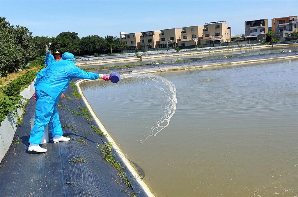 死亡率80%!台灣蝦爆染「十足目虹彩病毒」已有10間中標