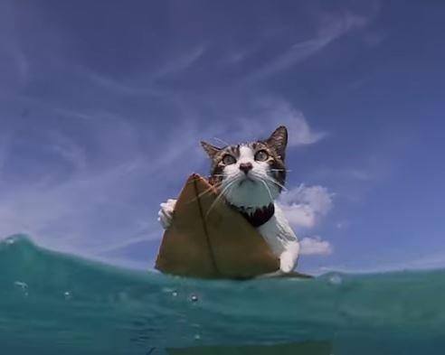 影/貓皇莫名超愛洗澡...主人帶去海邊找到牠的「超猛專長」