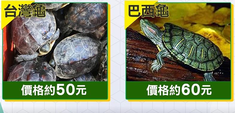 去玩夜市「撈烏龜」結帳破千 消保處:沒法可罰