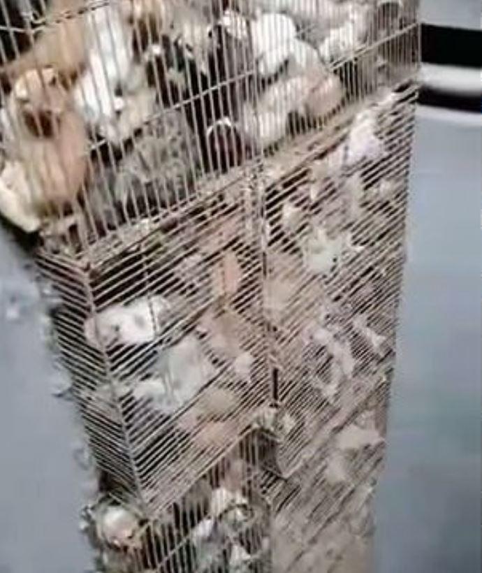 700隻貓咪關籠「準備被端上桌」 動保團體心碎搶救!