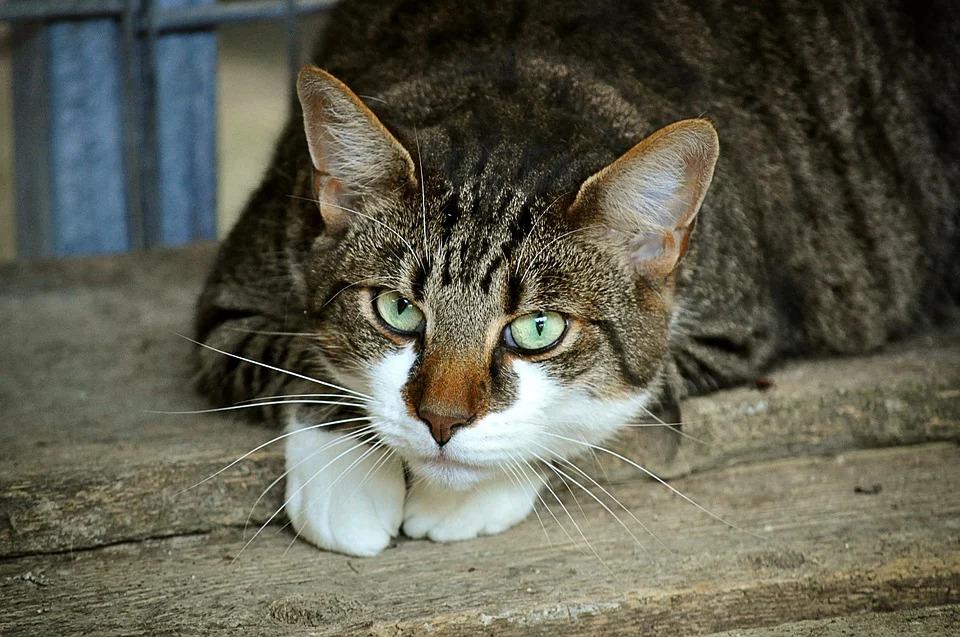 浪貓展開「貓的報恩」超用心 他收「6條肉腸回禮」上網求救!