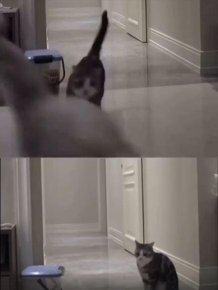 影/傷心貓每晚逗留走廊 主人嘆:牠忘不了「過世好友」