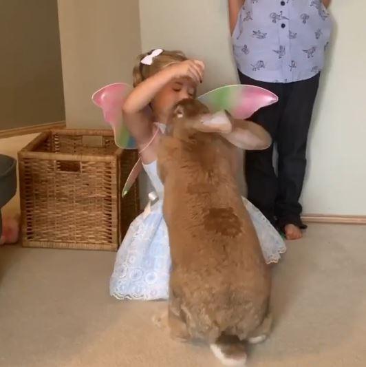 迷你兔長大變「山神等級」吸29萬苦主 小主人餵食直接被消失
