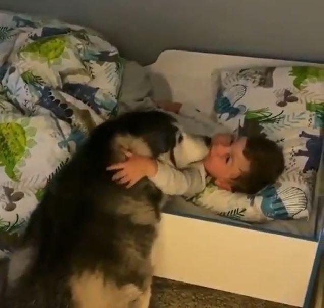 影/等一整個早上!狗狗氣炸衝進門「叫主人起床」互動太可愛