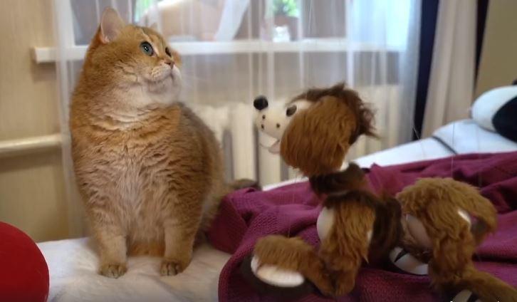 肥宅貓被迫跟「玩具狗」交朋友 「應付人類」反應太可憐!