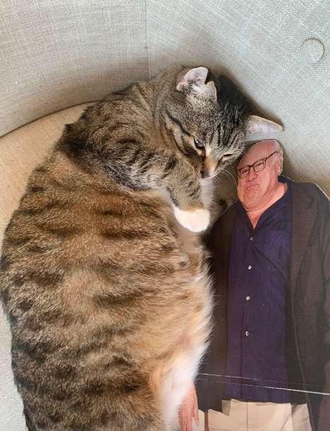 貓皇戀愛「臭臉阿杯」人型立牌 每天都「抱抱睡」鏟屎官超傻眼