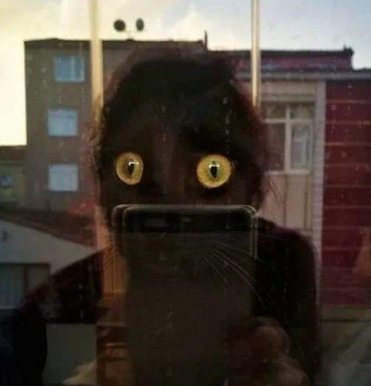 20張「看第一眼會嚇瘋」的照片 貓咪自拍...比你帥!