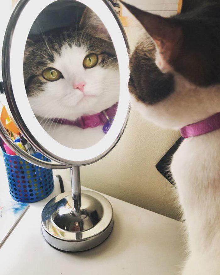 動物照鏡子