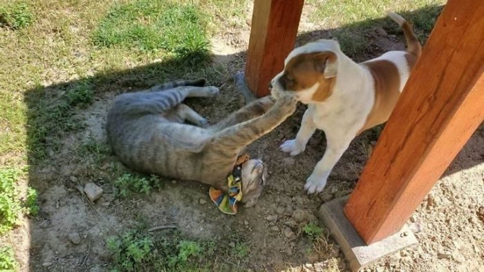 影/最好朋友「狗狗與喵姊」最後道別 「互舔蹭頭」當街剝洋蔥!