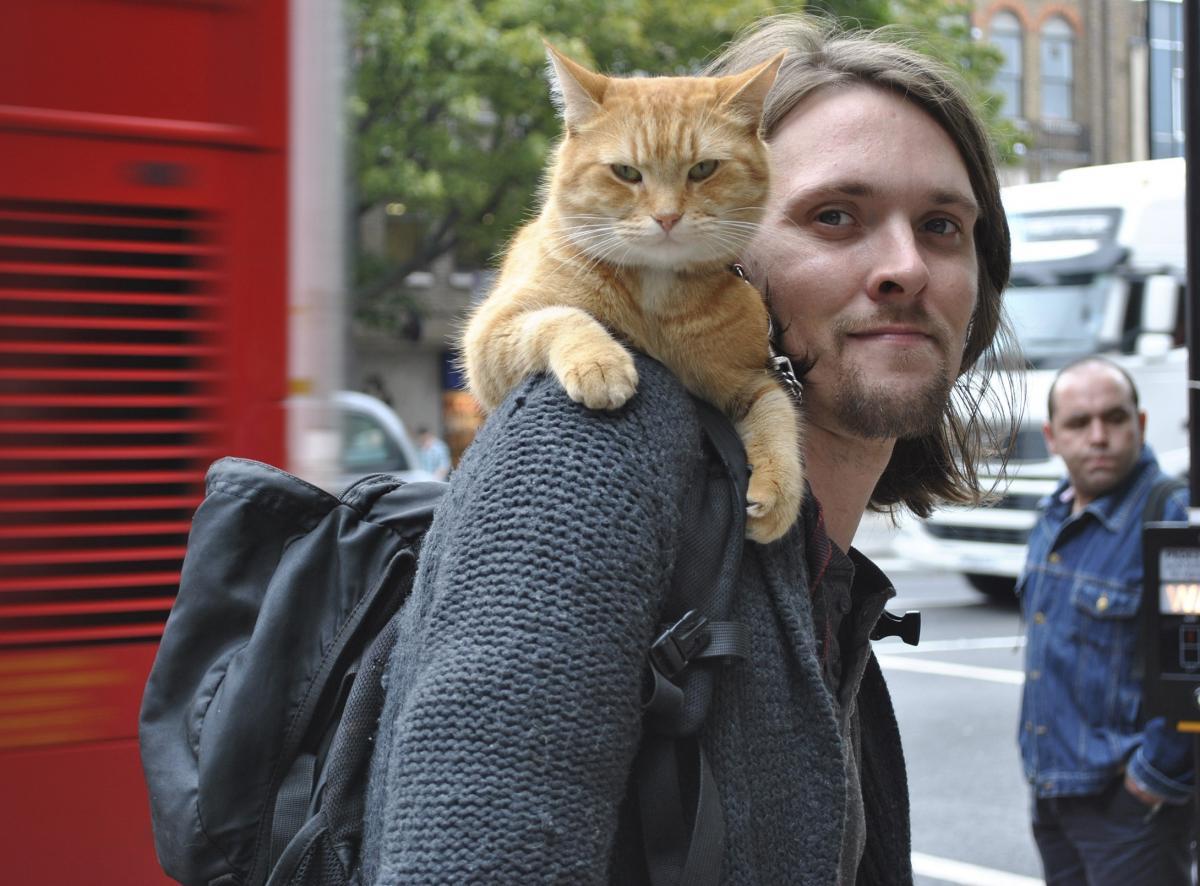 巨星「街貓Bob」當天使!成為浪子「戒毒理由」他心痛:光離開了我人生