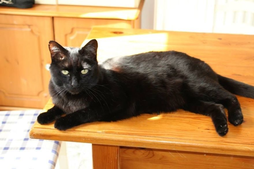 影/黑貓逝世一年回來看大家 主人曝光超清楚「監視器畫面」!