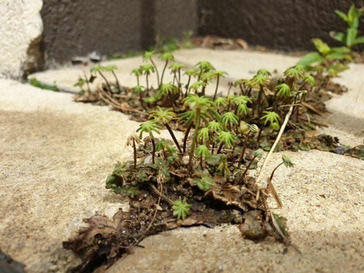 20個上帝「送給人類」的驚喜 顯微鏡下的植物竟然會笑!