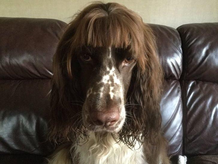 14隻「髮型比你帥」的狗狗 牠留「中二瀏海」秒變性格小生!