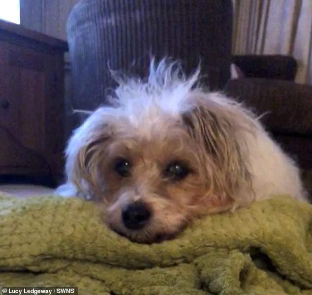 愛犬過世下葬「出現在天空」當天使!飼主含淚拍照:絕對是她
