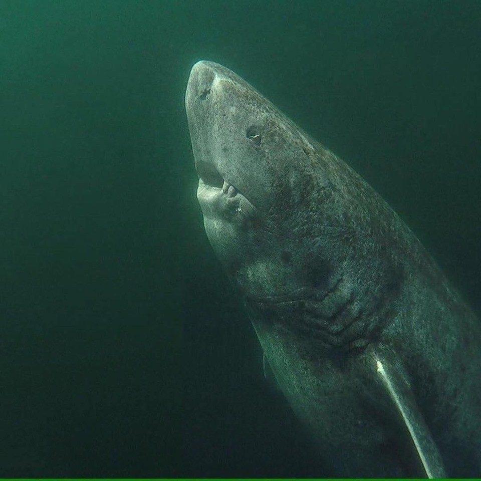 世界最老脊椎動物是這隻「400歲深海巨獸」牠曾見證美國獨立