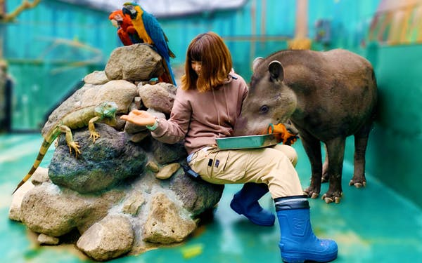 動物園開賣「活體做出來」的周邊 「企鵝腳印T恤」超夯!