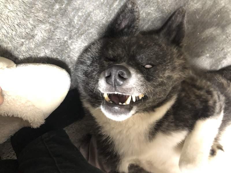 12種「造成主人陰影」的狗狗睡相 毛孩「睡到翻白眼」太衝擊!