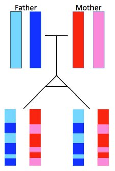 雙胞胎生的小孩「更像親手足」 超強「基因解析圖」點破血緣關鍵!