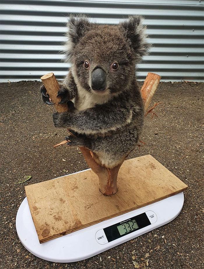 26種「幫動物量體重」爆笑絕招 他把「整隻長頸鹿」舉起來!