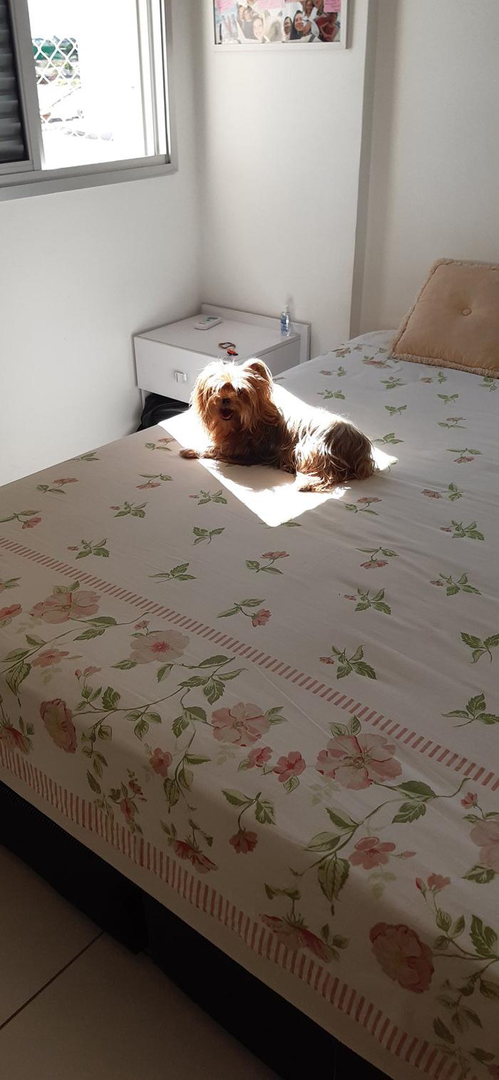 30隻「比人類更愛曬太陽」的寵物 狗狗「睡到變烤鴨」嚇壞主人