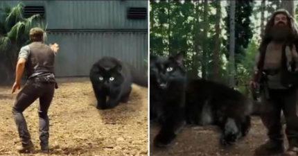 影/神人把黑貓「P進電影裡」完全無違和 《駭客任務》經典畫面太爆笑