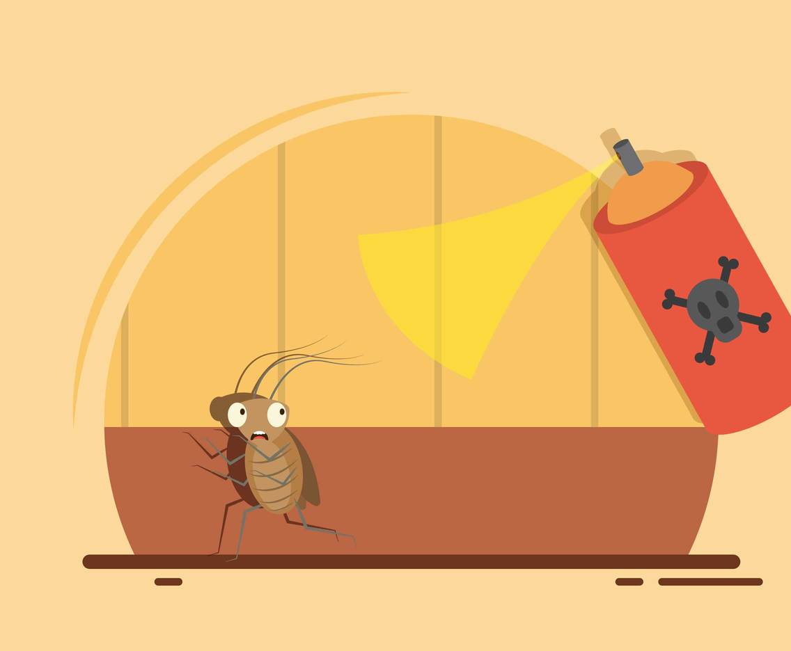 「蟑螂殼上」發現引發氣喘物質 全積在你每天「睡覺的地方」!