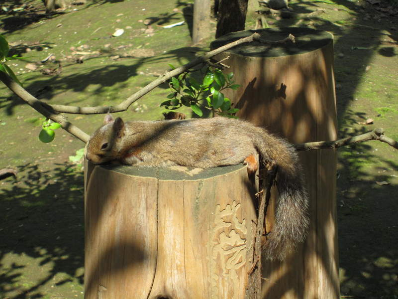野生松鼠看到鏡頭「馬上變豔星」 熟練「換姿勢」比麻豆還猛!