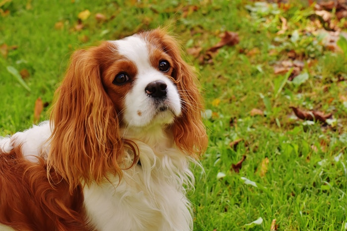 15種「絕對不會亂叫」的狗狗品種 台灣人「最愛狗種」也上榜!