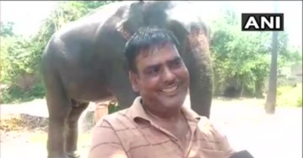 他把土地遺產「全送給大象」 怕牠們跟「那隻母象」一樣受害...