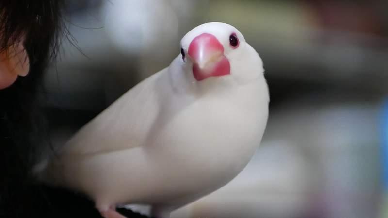 主人「把小鳥丟滾水」被網友罵翻 他無奈回擊:牠自己進去的
