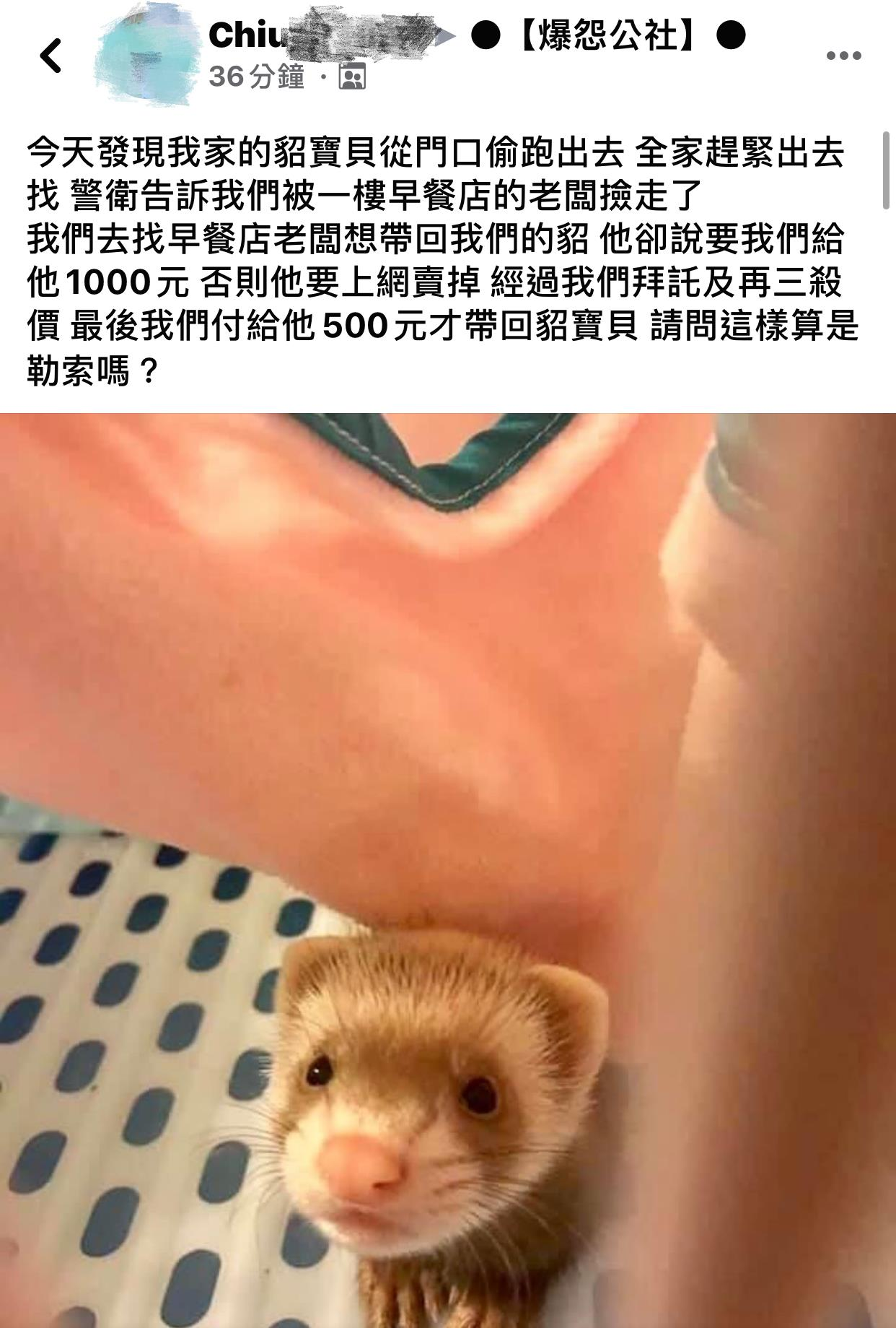 寵物貂「偷溜出門」被民眾攔截 主人「求帶回」他冷回:用買的!
