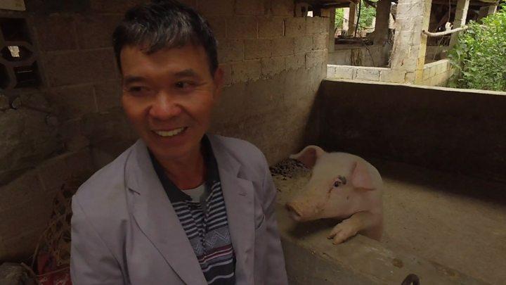 BBC證實「中國新病毒」目前無疫苗 可能「豬傳人」成為新危機