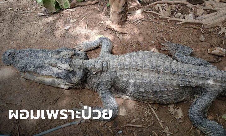 鱷魚「拒絕進食」瘦成乾 專家「打開肚子」嚇傻:人類害的!