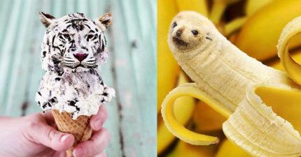 獵奇獸醫「縫合動物與日常用品」柯基吐司怎看都想咬