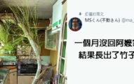 回家發現「整片竹林」從地板衝出 網友傻眼:已經頂到天花板
