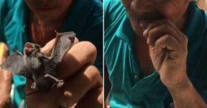 影/台灣工人「生吃蝙蝠」當下酒菜 網噁爆:不怕死嗎?