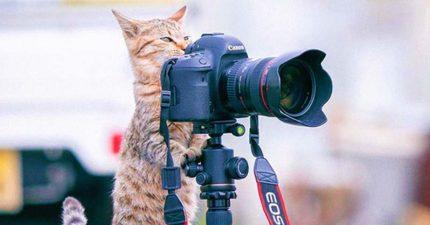 18張小貓是「最棒攝影師」的證明!立腳架「專業歪頭」超標準