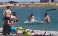 影/遊客「爆毆小海豹」只為讓孩子合照...然後丟回海裡!
