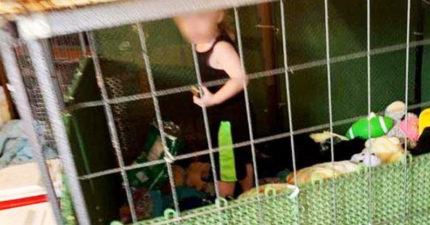 動保團體救動物...驚見1歲男童「被關狗籠」身邊爬滿蟑螂老鼠