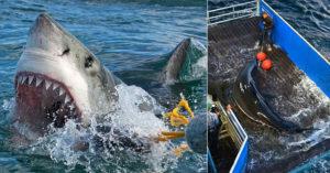 海灘出現5隻「4米大白鯊」民眾嚇翻 專家:危險性超低!