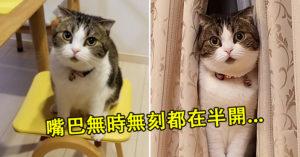 貓皇「嘴巴一直張開開」嚇壞網友 淡定飼主:牠有2張嘴