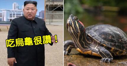 北韓人餓到營養不良!金正恩建議「吃烏龜充飢」:能順便減肥
