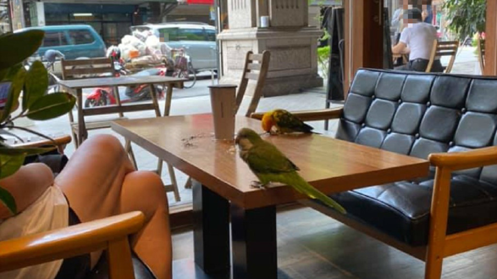 鳥主人帶鸚鵡喝咖啡「屎滴滿桌」隔壁客人過敏大崩潰