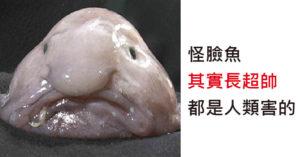 被誤會多年的真相「水滴魚原本長超帥」都是人類害的!