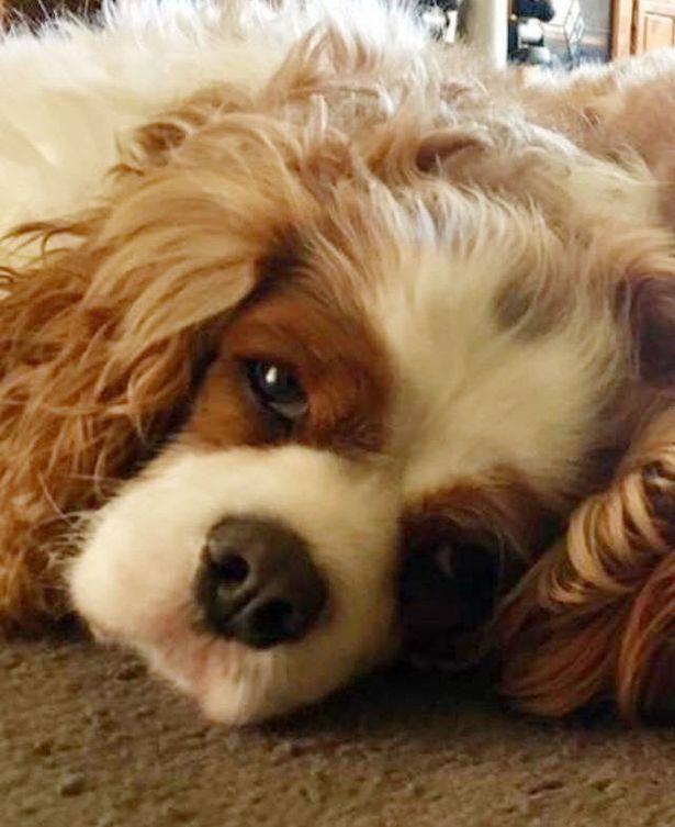 最好的好朋友離開了...小萌犬「心痛到斷氣」3週後跟著上天堂