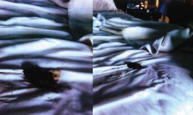 強尼戴普公布前妻安柏「在床上拉屎」照!幫傭:寵物都沒那麼噁