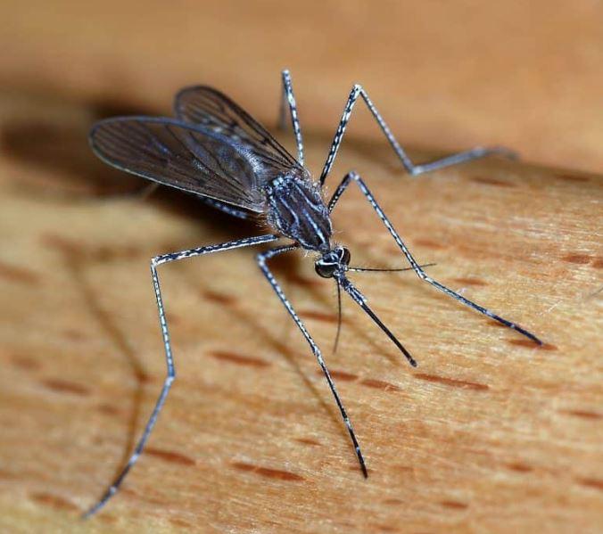 實驗室釋放百萬「基改蚊子」稱能終結病毒!科學家警告:後果不堪設想