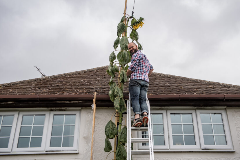 傻瓜爸爸為了「兒子一句童言」真的種出「比房子高」的向日葵